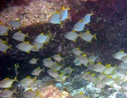 Dafni s Eilat Open sea fishes
